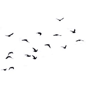Flock of Birds PNG Transparent Flock of Birds.PNG Images.