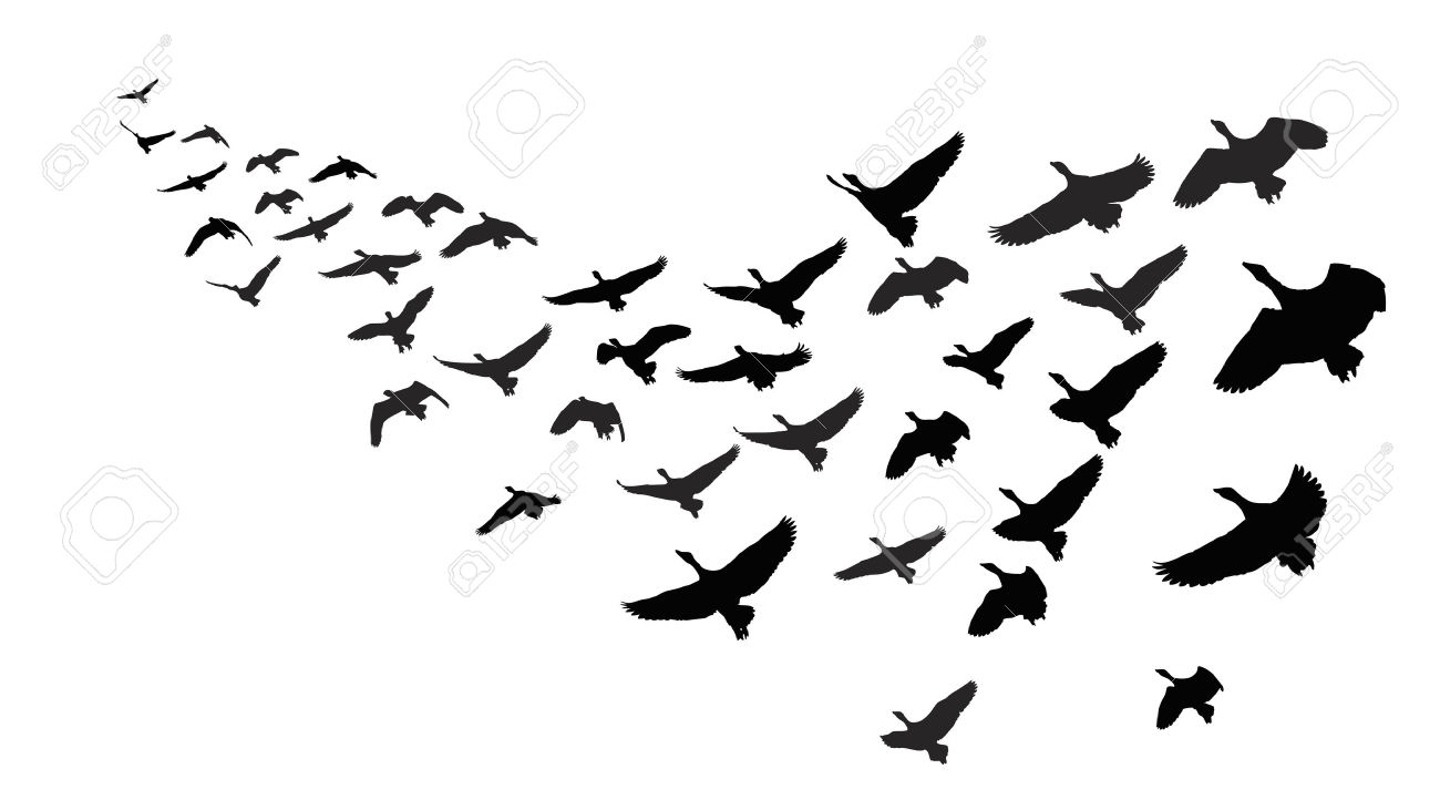Migrating birds clipart.