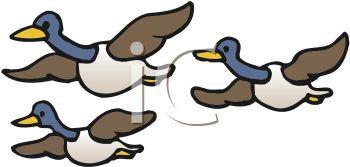 Bird migration clipart.