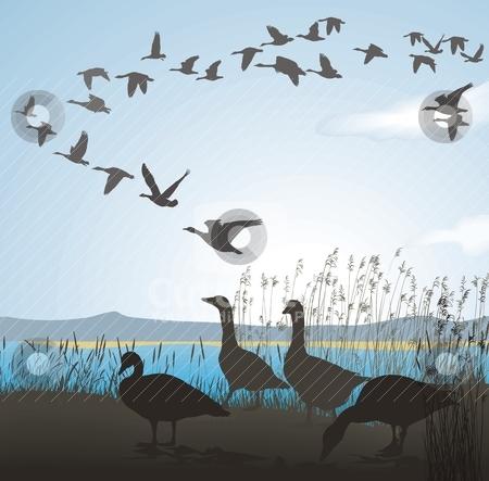 Animal migration clipart.