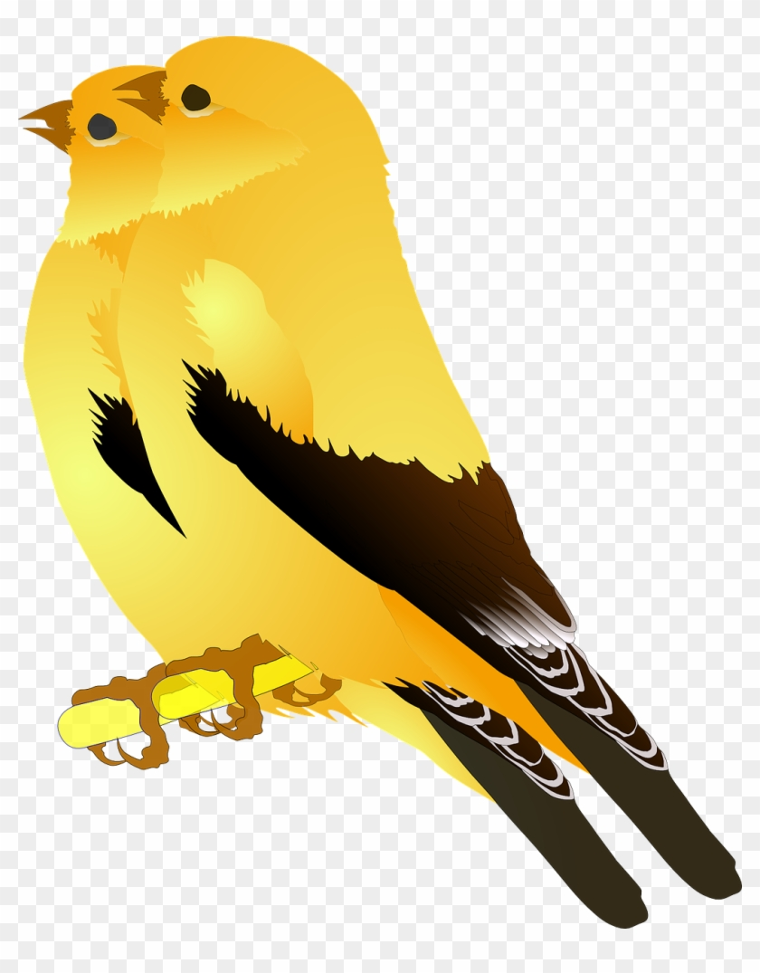 Birds Gold Finches Singing Png Image.