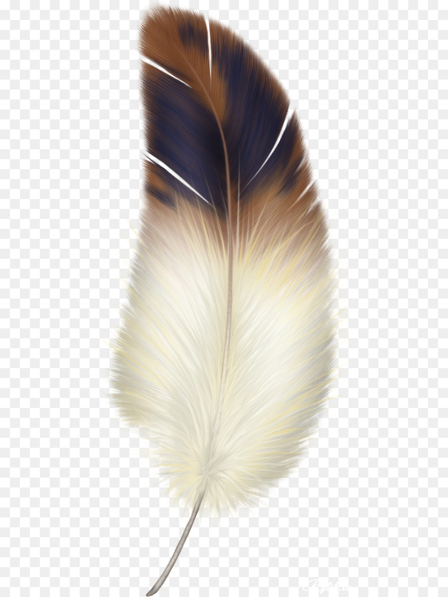 Feather With Birds Clipart.