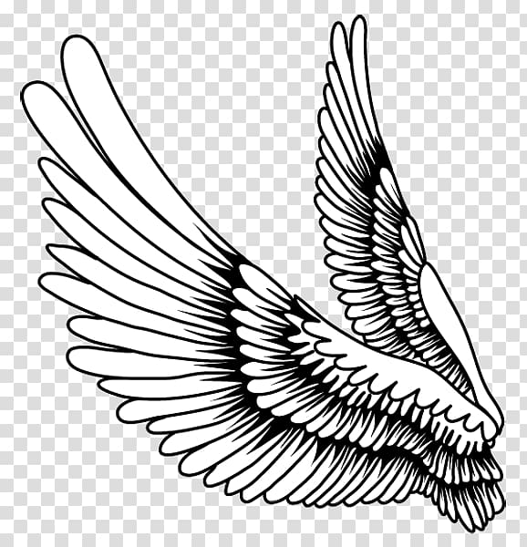 Drawing Bird Feather, Creative feather wings,Cartoon painted.