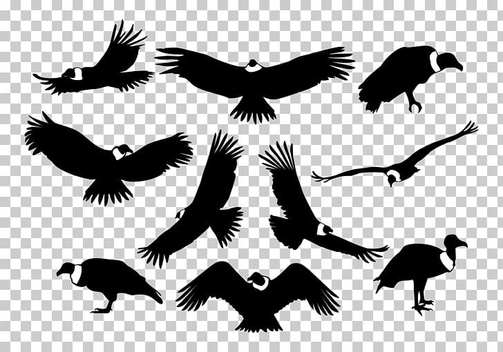 Bird of prey Silhouette Condor, vulture PNG clipart.