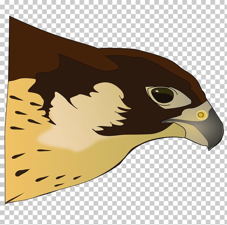 Bird of prey Hawk , Tomahawk PNG clipart.