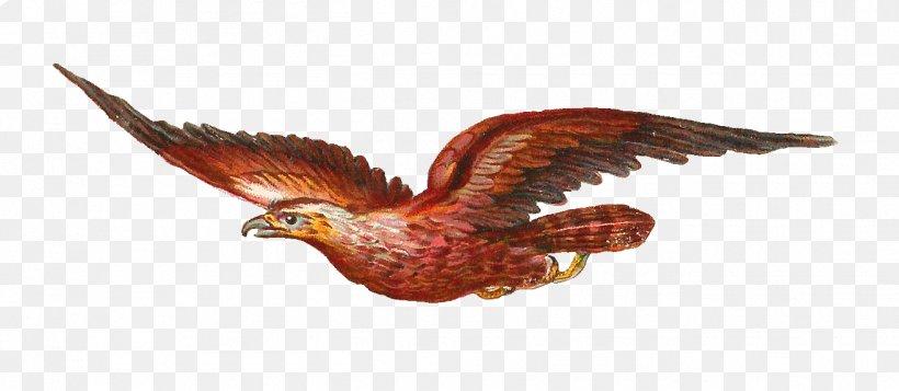 Bird Of Prey Owl Bald Eagle Clip Art, PNG, 1315x574px, Bird.