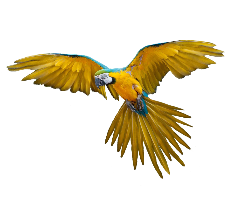 Colorful Flying Birds Png Group (+), HD Png.
