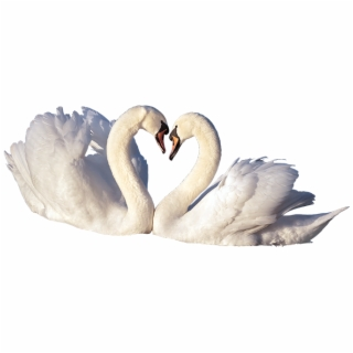 Love Bird PNG Images.