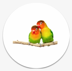 Birds Png Hd PNG Images.