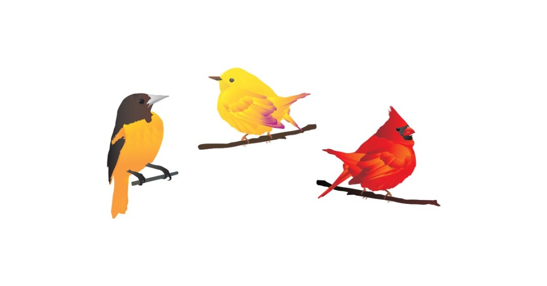 Birds illustrations.
