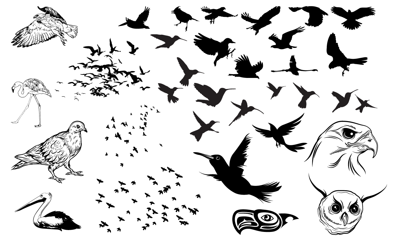 Birds Vector Pack for Adobe Illustrator.