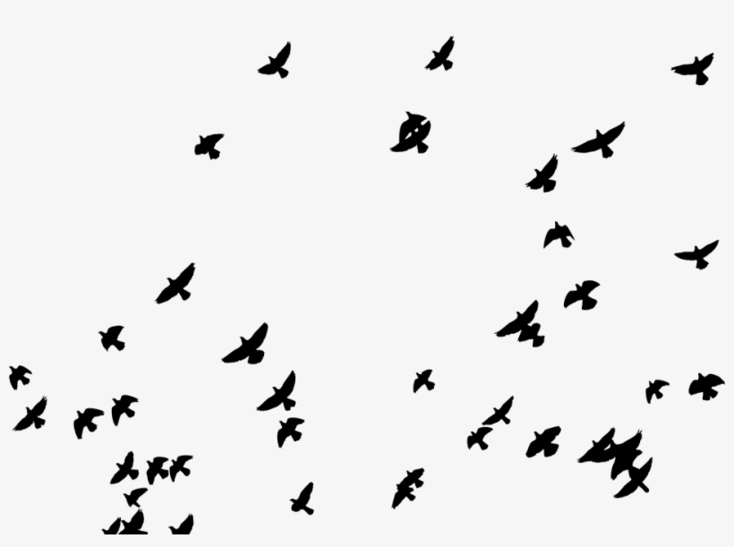 Flying Birds Vector Png.