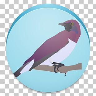 Bird Watching PNG Images, Bird Watching Clipart Free Download.