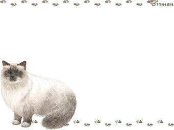 Birman clipart graphics (Free clip art.
