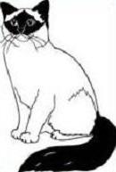 Free Birman Cat Clipart.