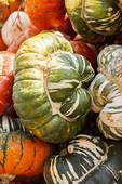 Stock Image of Bischofsmütze Turk Turban cucurbita pumpkin.