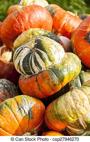 Picture of Bischofsmütze Turk Turban cucurbita pumpkin pumpkins.