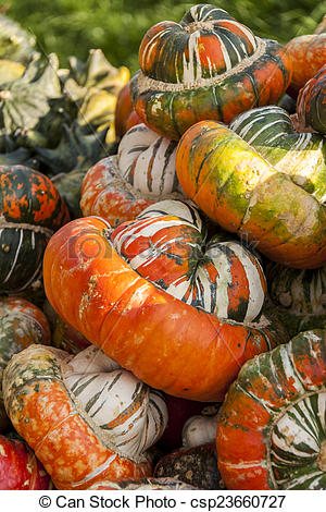Stock Photo of Bischofsmütze Turk Turban cucurbita pumpkin.