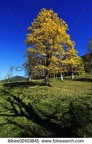 "Stock Image of ""Autumn mood near Grubenbach, Berchtesgaden, Upper."