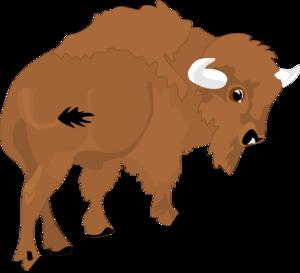 Bison Clipart.