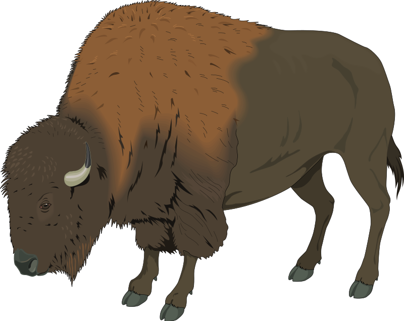 Free Bison Cliparts, Download Free Clip Art, Free Clip Art.