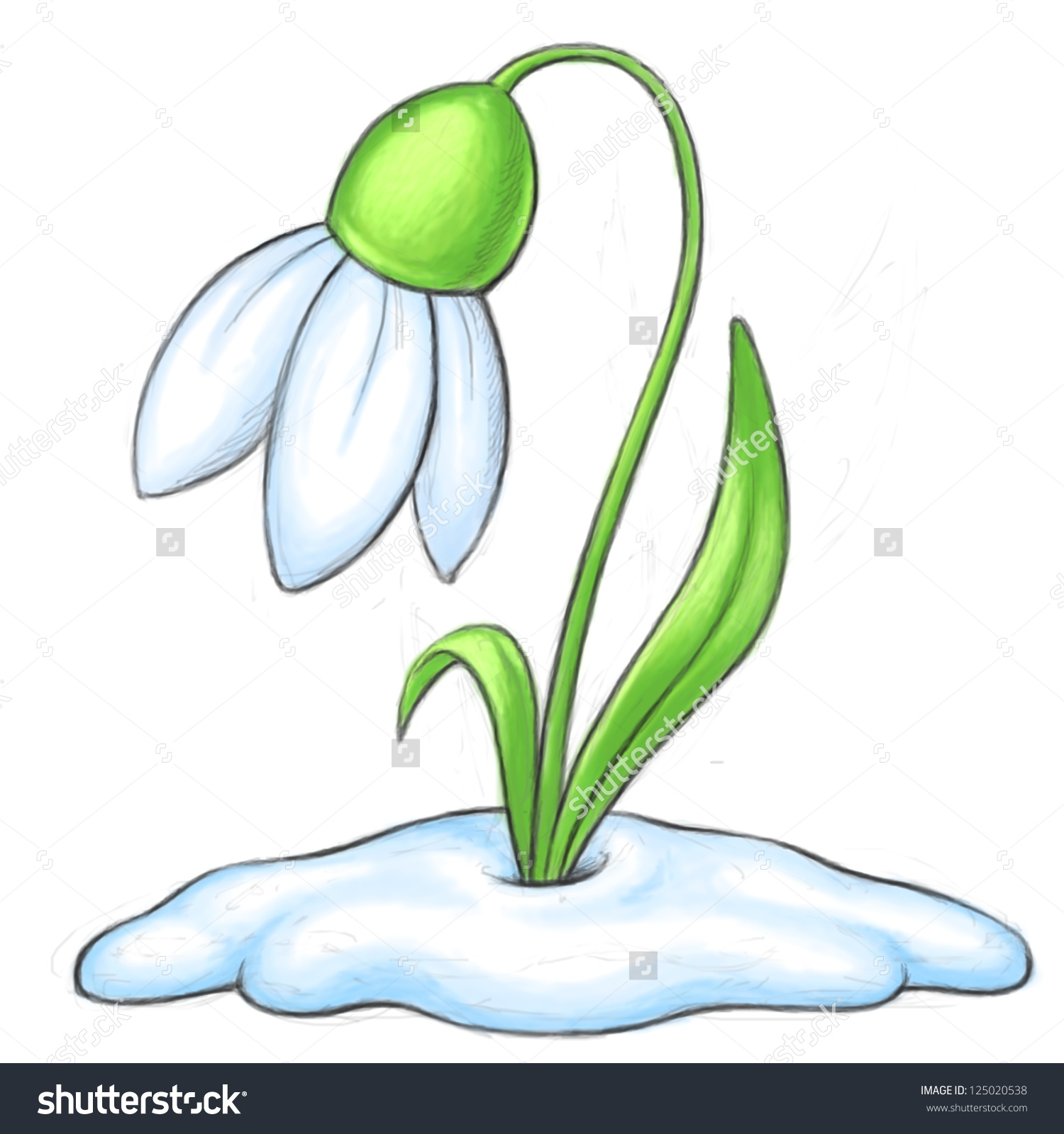 Snowdrop Cartoon Illustration Bitmap Clipart Stock Illustration.