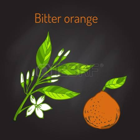 1,204 Bitter Orange Stock Illustrations, Cliparts And Royalty Free.