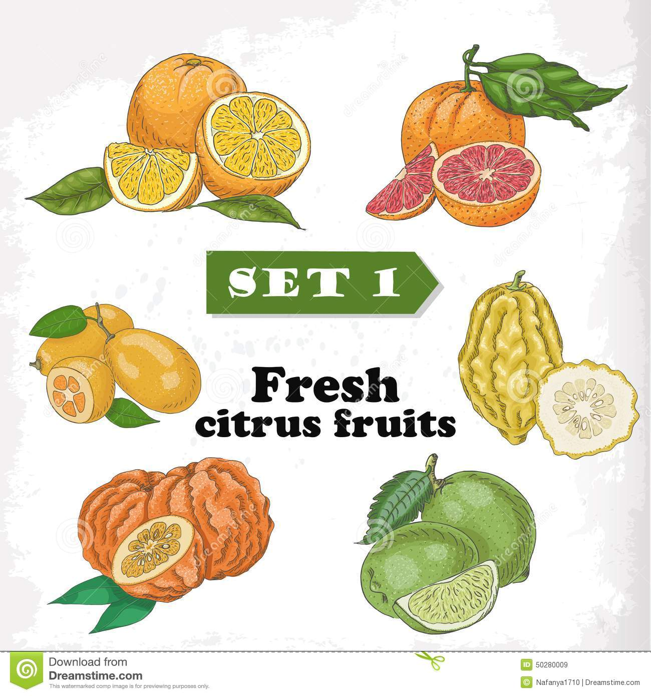 Set 1 Fresh Citrus Fruits Of Orange, Grapefruit, Citron, Lime.