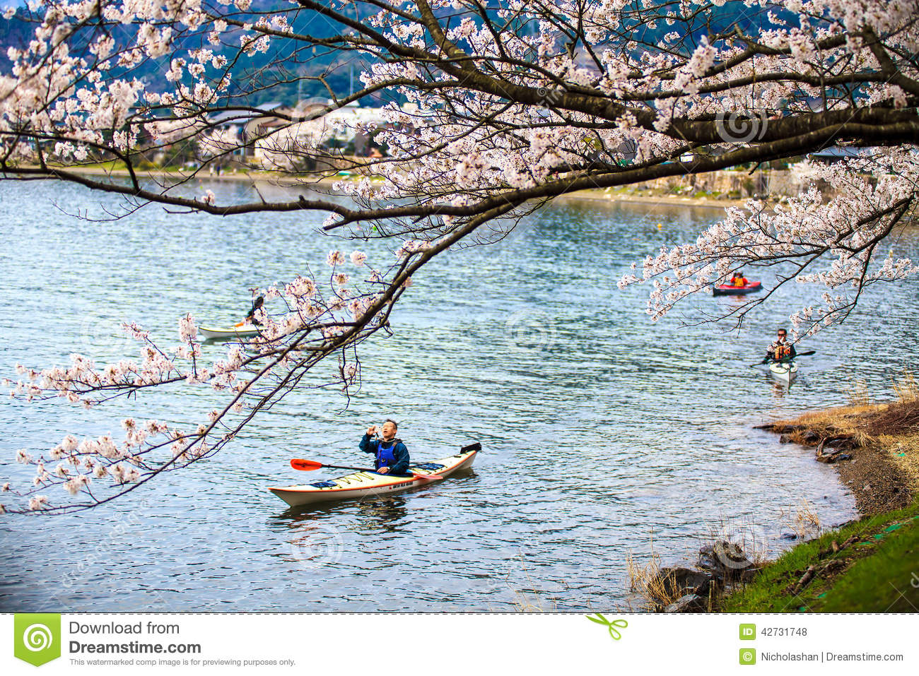 Sakura Season In Japan Editorial Stock Photo.