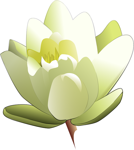 Free vector graphic: Lily, White, Lotus, Water, Rose.