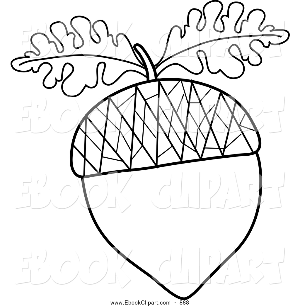 White oak tree black and white clipart with acorns.