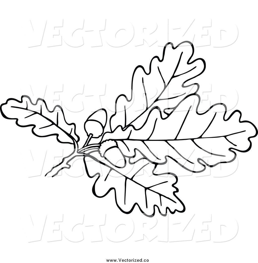 Oak leaves and acorns clipart.
