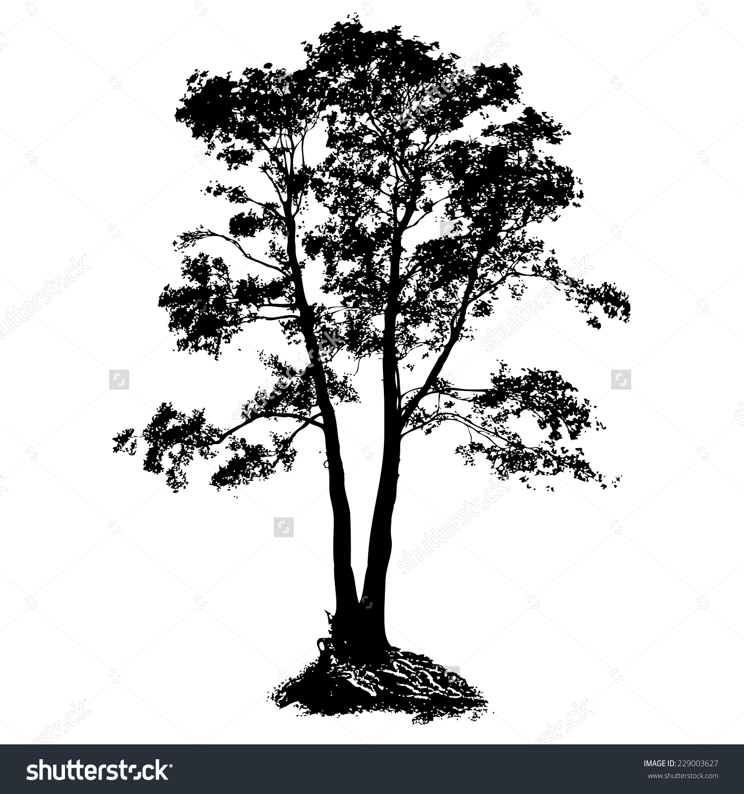 Black Alder Full Size Tree Isolated Stock Vector 229003627.