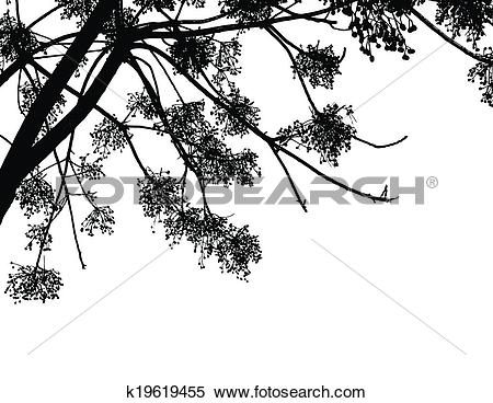 Clipart of Black Alder tree branches k19619455.