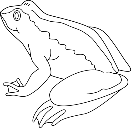 Frog black and white frogs clip art tree frog black and white free.