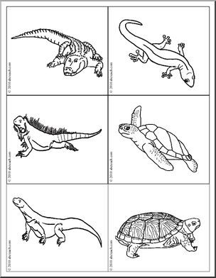 Science: Picture Cards: Reptile/Amphibian (b/w).