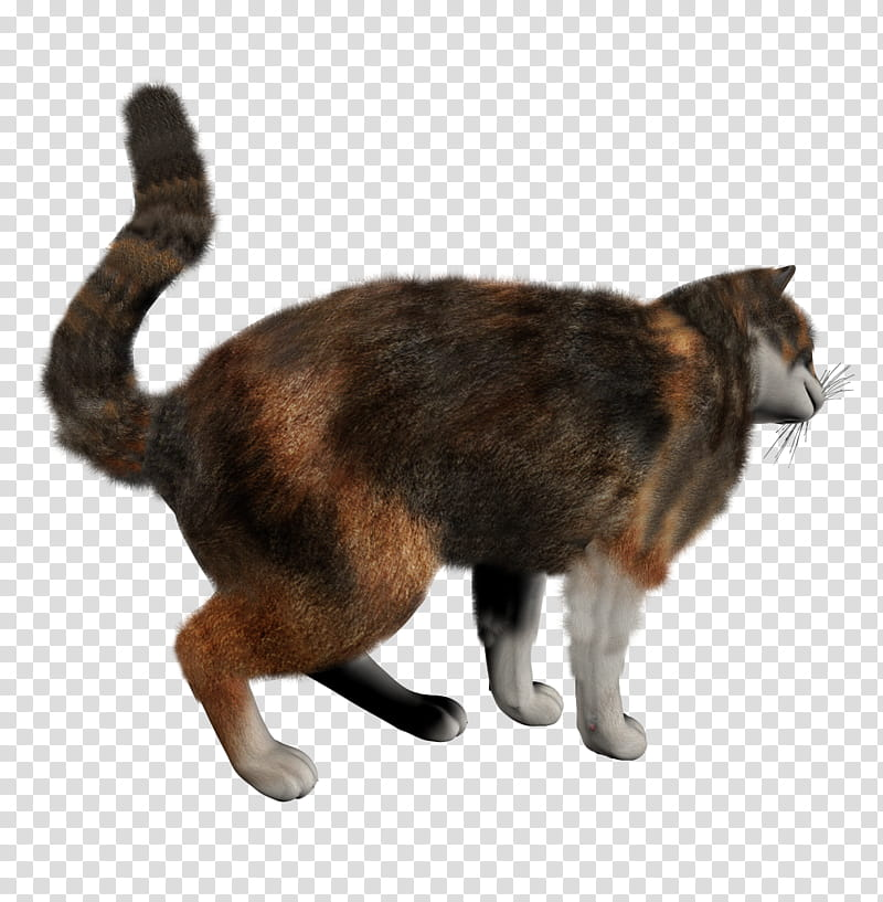 High Quality Cats , brown and black cat transparent.