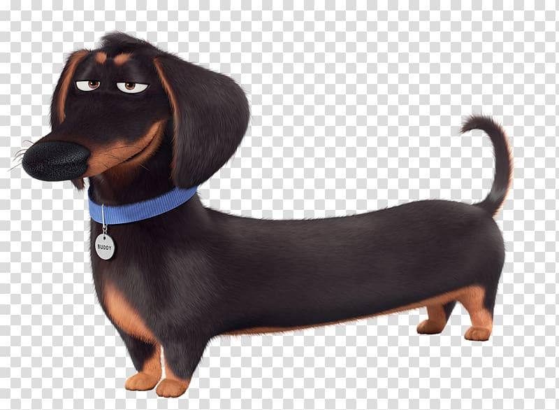 Black and tan dachshund illustration, Dachshund Illumination.
