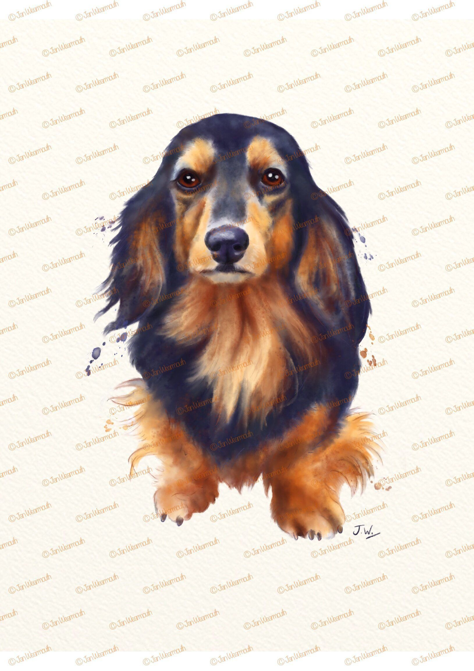 Dog clipart watercolor clipart digital download. Dachshund.