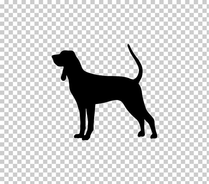 Bluetick Coonhound Black and Tan Coonhound Treeing Walker.
