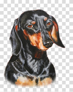 Black And Tan Coonhound PNG clipart images free download.