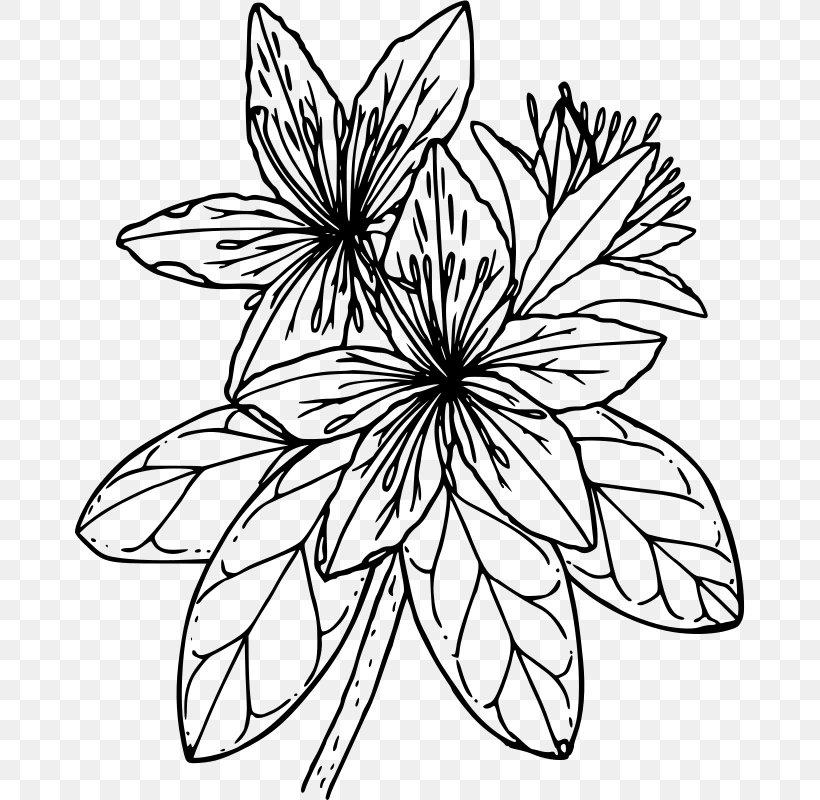 Azalea Drawing Coloring Book Clip Art, PNG, 670x800px.