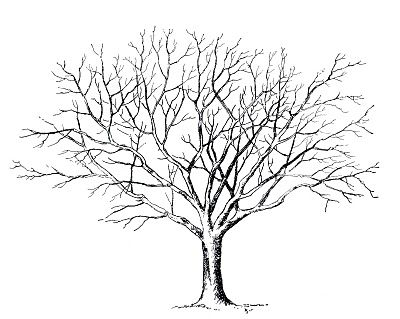 Best Tree Clipart Black And White #18982.