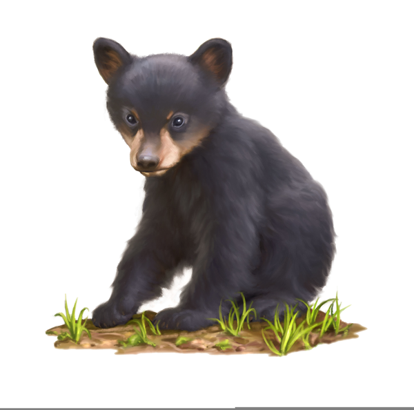 Bear Cub Clipart Black And White (87+ images in Collection) Page 2.
