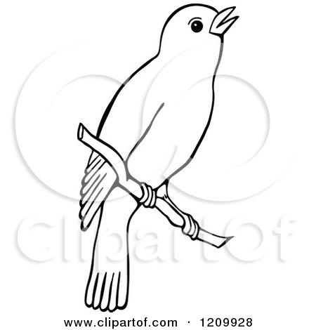 Clipart of a Black and White Bird on a Branch.