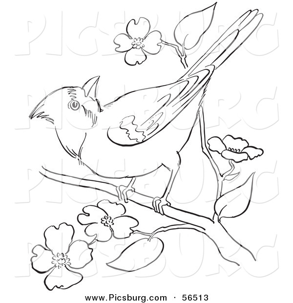 Clip Art of a Cardinal Bird on a Blossoming Tree Branch.