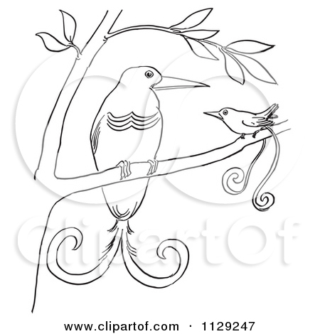 Cartoon Clipart Of Outlined Birds Of Paradise In A Tree.