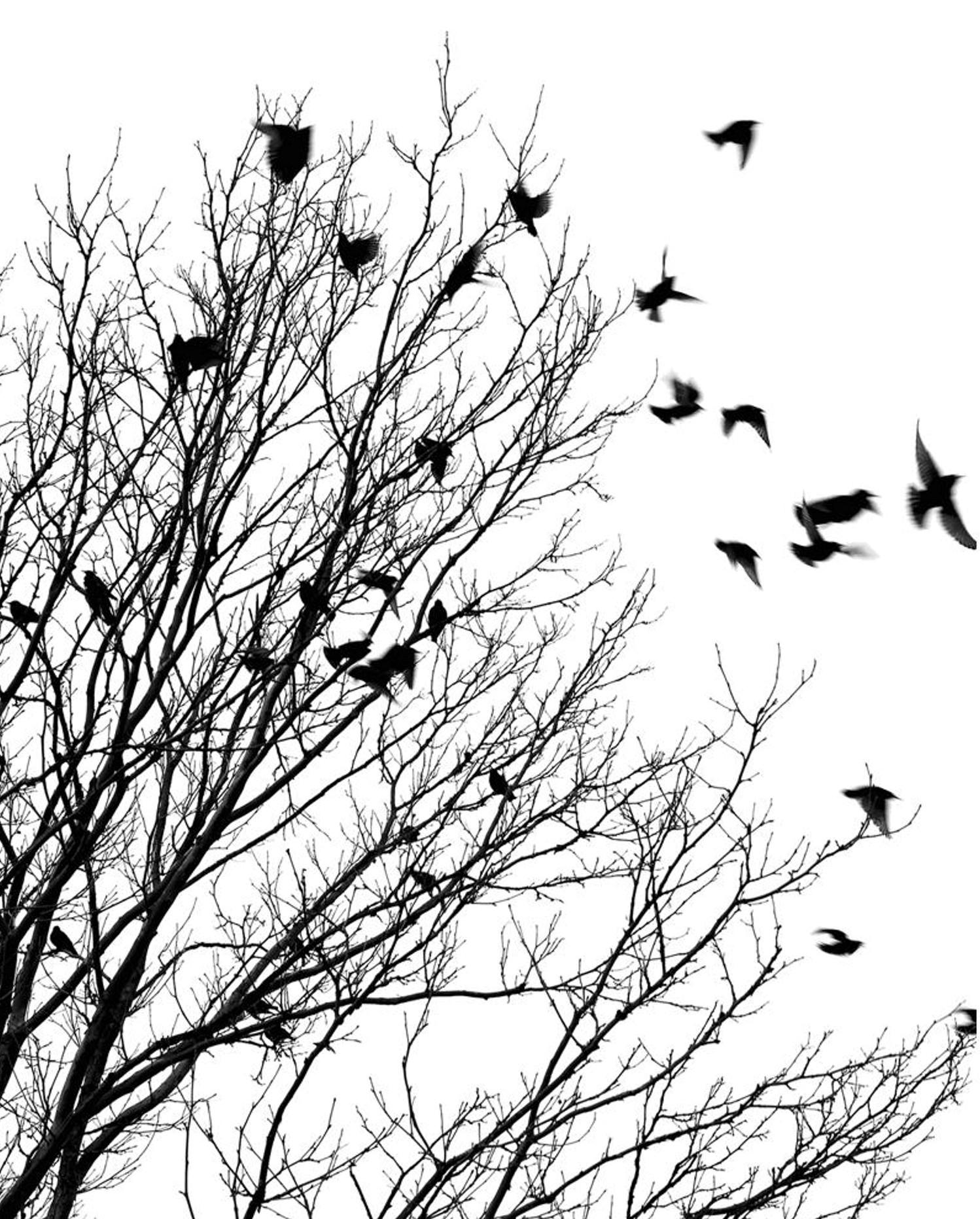 Similiar Drawing Of Bird On Tree In Winter Keywords.