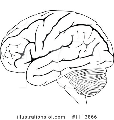 black and white brain clipart clipground
