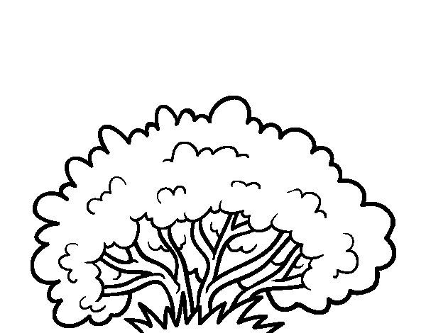 Bush clipart black and white, Picture #139235 bush clipart.